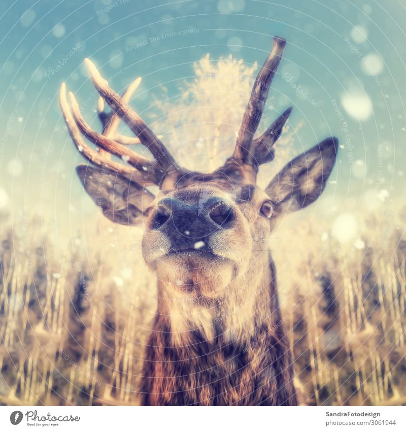 Portrait of a deer with snowflakes Nature Wild animal Animal face Zoo 1 Power Willpower Animal Themes antlers autumn brown buck case fish eye optic forest funny