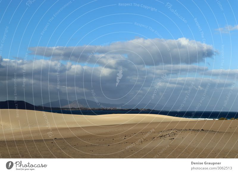 Sand dunes on Fuerteventura Spain Lifestyle Vacation & Travel Summer Beach Environment Nature Landscape Animal Climate Beautiful weather Wind Park Ocean Island
