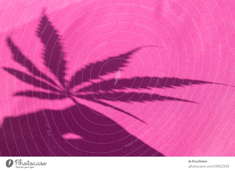 shadowy existence Alternative medicine Plant Leaf Agricultural crop Sign Utilize Touch To hold on Fresh Pink Bans Cannabis Intoxicant Medication Drug addiction
