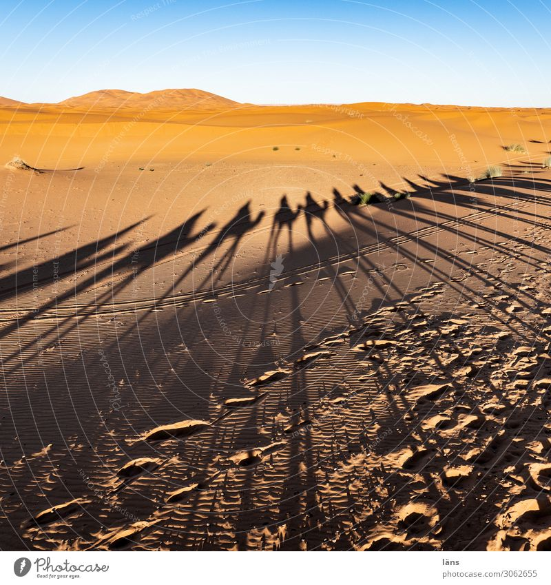 Caravan Vlll Vacation & Travel Tourism Trip Far-off places Human being Life Crowd of people Desert Sahara Lanes & trails Camel Dromedary Group of animals Blue