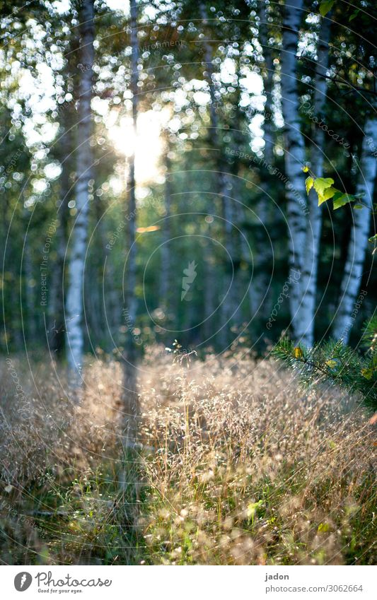 a ray of hope. Shaft of light clearing Flare Light Deserted Shadow Colour photo Day Exterior shot Sunlight Nature Visual spectacle Blur Plant Birch wood Grass