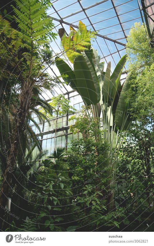 greenhouse Greenhouse Botany Exotic Botanical gardens Garden Interior shot Virgin forest Palm tree Tree Plant Leaf Nature Wellness green oasis Market garden