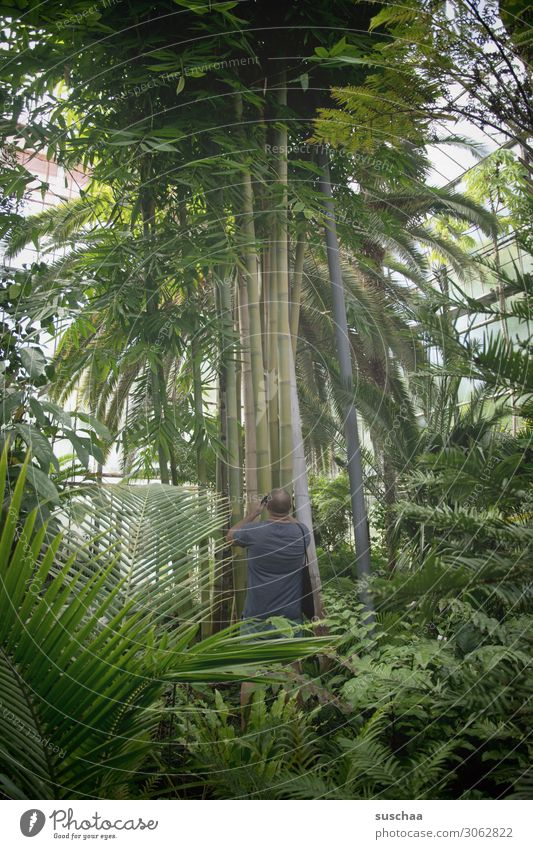 jungles Virgin forest Botany Botanical gardens Horticulture Greenhouse Plant Tree Palm tree Leaf palm garden Interior shot Tree trunk Large Exotic Man