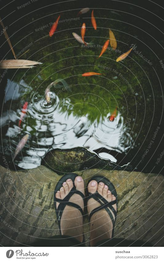 fish watching feet Flip-flops Stand Woman Toes Edge Body of water Brook Lake Pond Fish Goldfish Reflection gasp Air bubble Observe Fishpond
