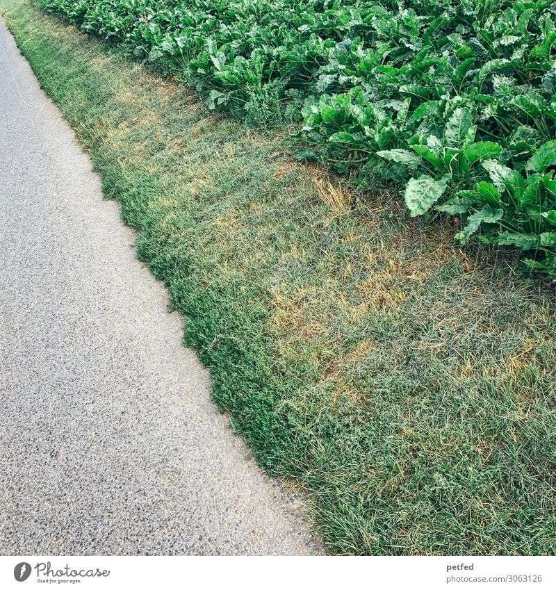 Stripes of nature Nature Earth Summer Plant Grass Agricultural crop Street Lanes & trails Long Natural Gray Green Design Inspiration Art Colour photo