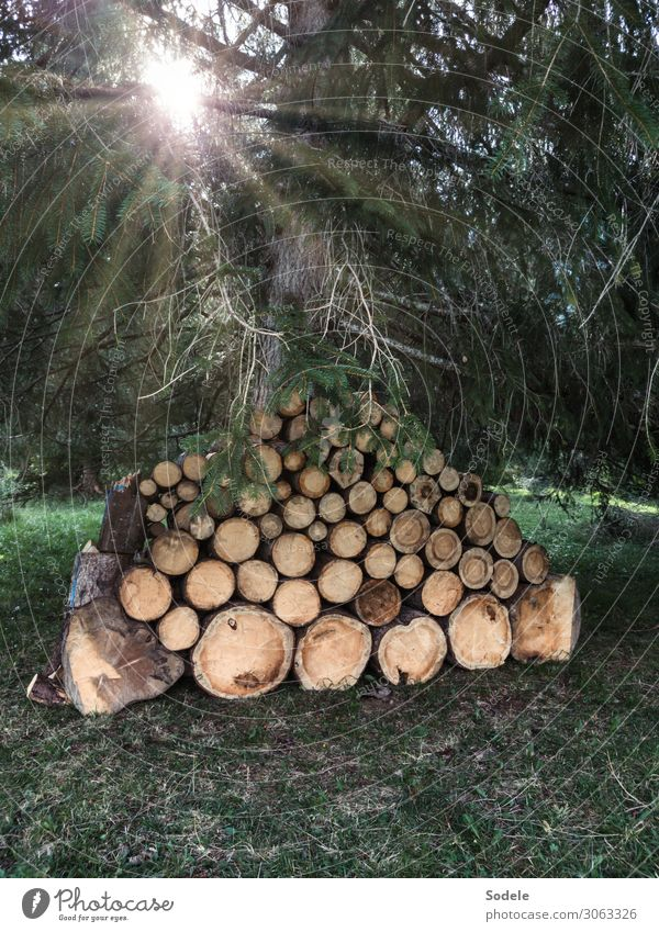 firewood supply Agriculture Forestry Energy industry Nature Sun Tree Agricultural crop Spruce forest Raw materials and fuels Stack Stack of wood Supply Wood