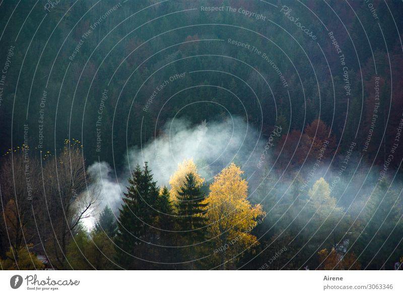 Nebulous fire signal. Fire Autumn Forest Alps Mountain forest Mixed forest Forest fire Smoke cloud Smoke signal Dark Hot Yellow Green White Dangerous Threat