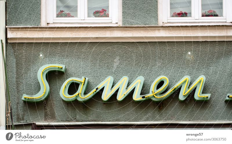 sperm bank Wall (barrier) Wall (building) Facade Stone Glass Characters Old Town Shopping Change Seed Neon sign Trade Neon light Colour photo Subdued colour