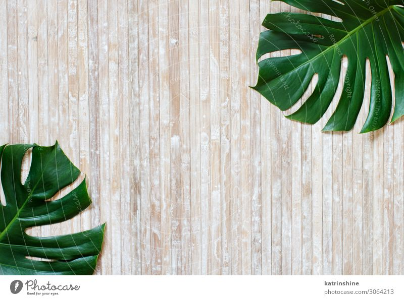 Tropical Monstera And Palm Leaves On A Wooden Background A Royalty Free Stock Photo From Photocase Inspired by nature and wildlife. photocase