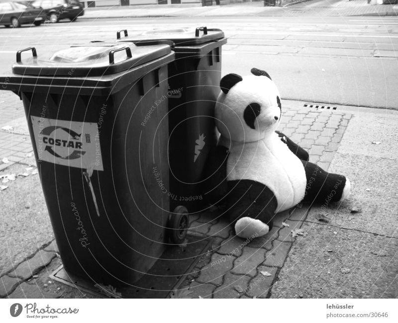 panda takes a break Panda Trash Black White Break Gray scale value Obscure Bear Sit Street Car ... Paving stone