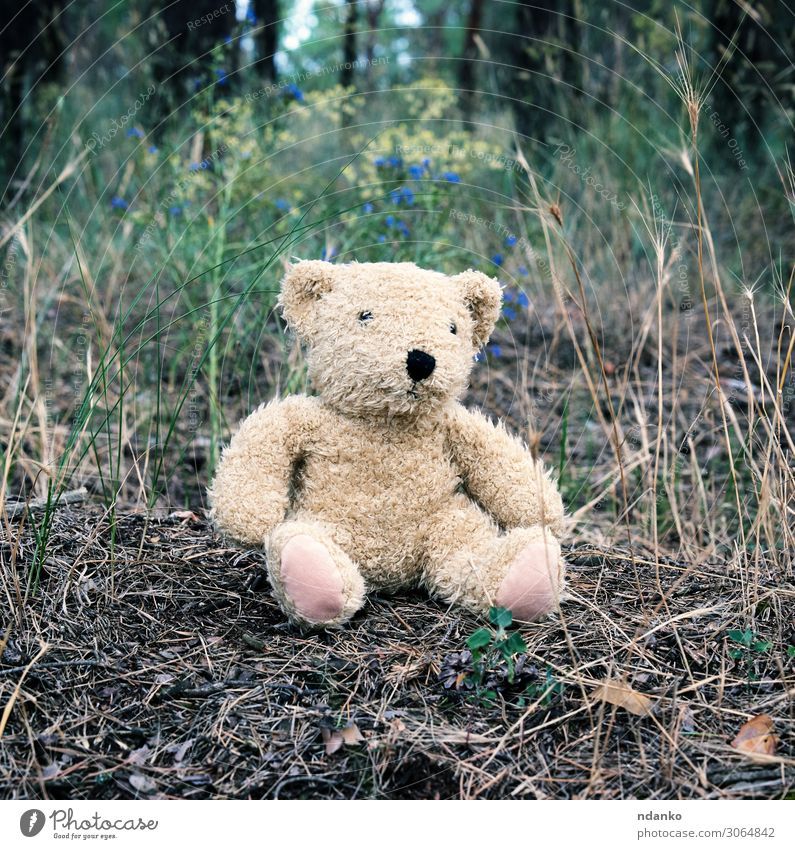abandoned brown teddy bear sitting Joy Summer Infancy Nature Animal Sand Park Forest Street Fur coat Toys Doll Teddy bear Old Small Funny Natural Cute Soft