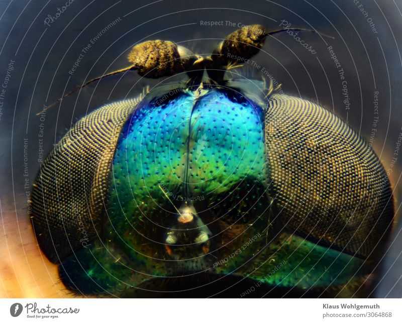 Design made by nature, head of a tiny fly magnified 100 times Environment Nature Animal Summer Fly Animal face Observe Looking Fantastic Blue Green Black Chitin