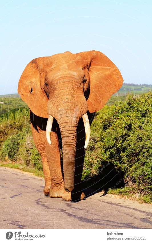 on the road again king of the road Vacation & Travel Tourism Trip Adventure Far-off places Freedom Safari Wild animal Animal face Elephant 1 Exceptional Exotic