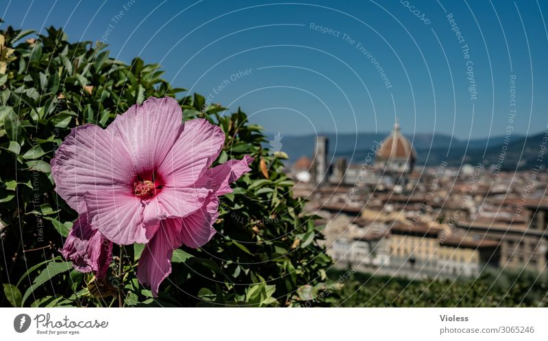Florence III Tuscany Cradle of the Renaissance Piazzale Michelangelo Cathedral Santa Maria del Fiore Italy bishop's church Arno Hibiscus Blossom