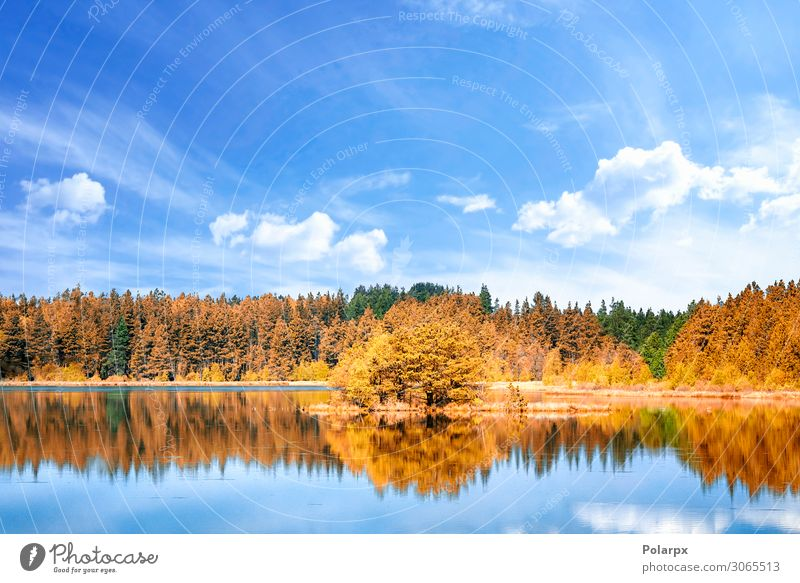 Autumn lake scenery with colorful trees Vacation & Travel Environment Nature Landscape Sky Tree Leaf Park Forest Coast Pond Lake River Fresh Bright Natural Blue