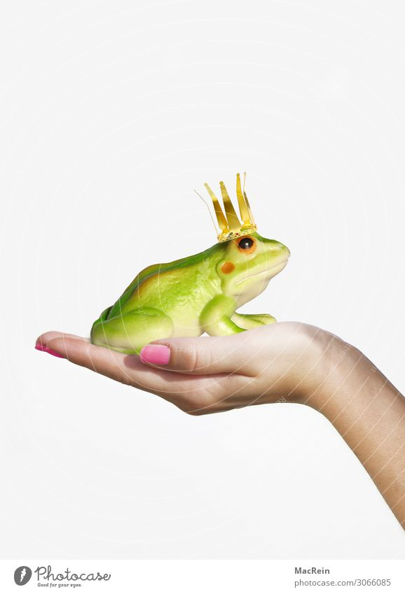 Frog king on the hand Happy Girl Woman Adults Hand 1 Human being 18 - 30 years Youth (Young adults) Animal Kissing Love Green Emotions Desire Frog Prince