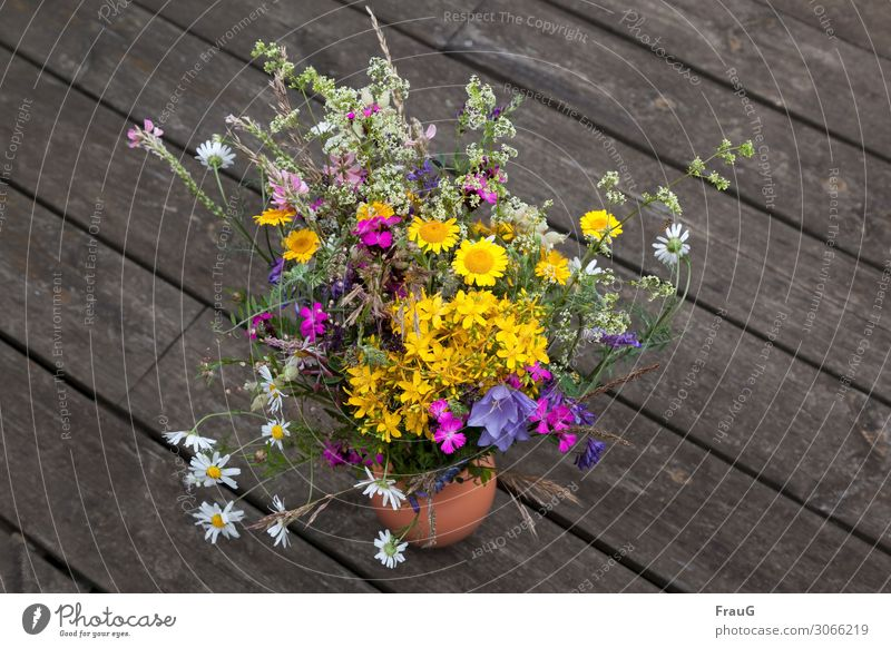 "Summer meadow bouquet plants flowers Bouquet meadow flowers motley boards weathered surface,"" Vase Nature"