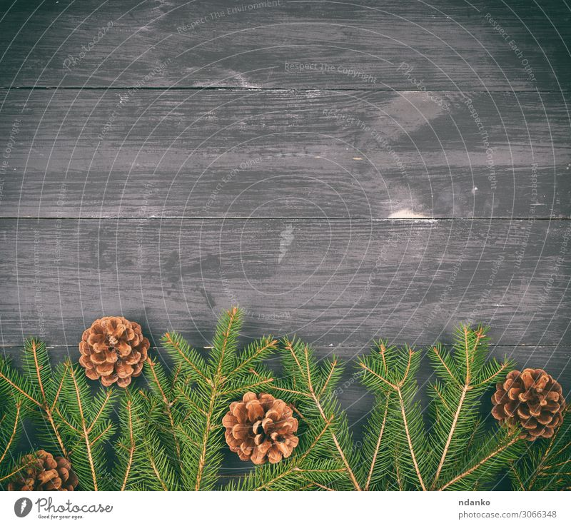 green branches of needles on a black background Design Winter Decoration Table Feasts & Celebrations Christmas & Advent New Year's Eve Nature Plant Tree Wood