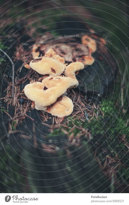 #A# Mushrooms down Art Esthetic Nature Nature reserve Love of nature Force of nature Experiencing nature Miracle of Nature Natural science Natural growth