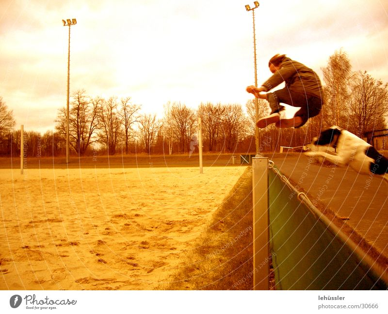 Human being Jump Dog Sand Fence Sporting grounds