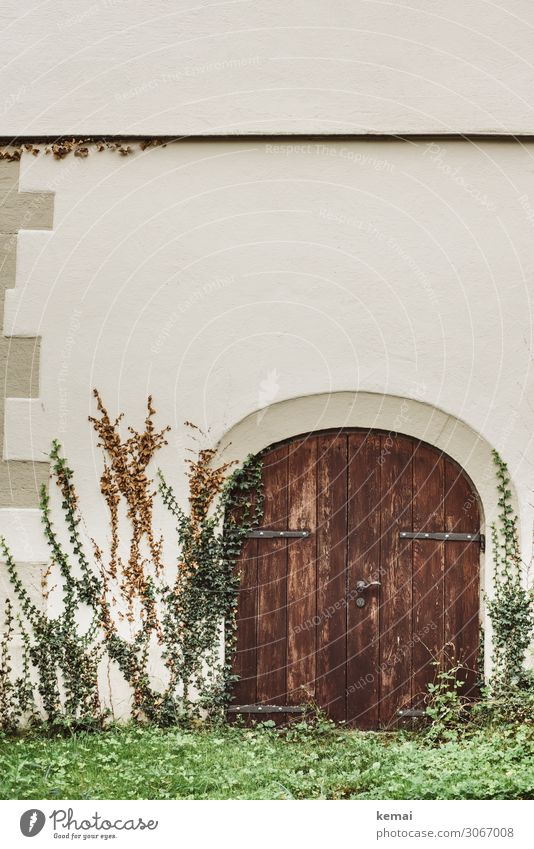 gate Plant Ivy Wall (barrier) Wall (building) Facade Door Gate Wooden gate Growth Authentic Round Beautiful Brown Green White Closed Colour photo Subdued colour