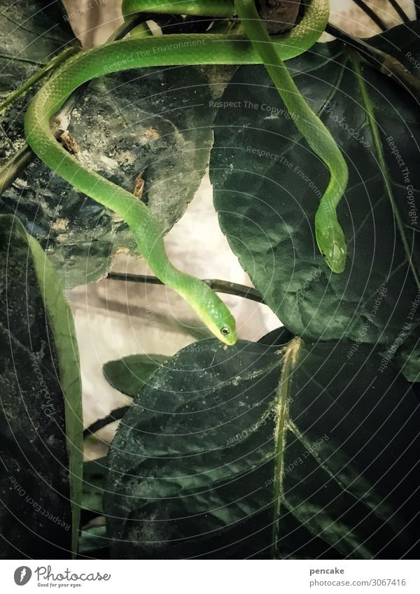!trash! 2019 | weave through Exotic Adventure Plant Leaf Virgin forest Wild animal Snake Animal Thin Cold Nature Curiosity Terrarium Green Leisure and hobbies