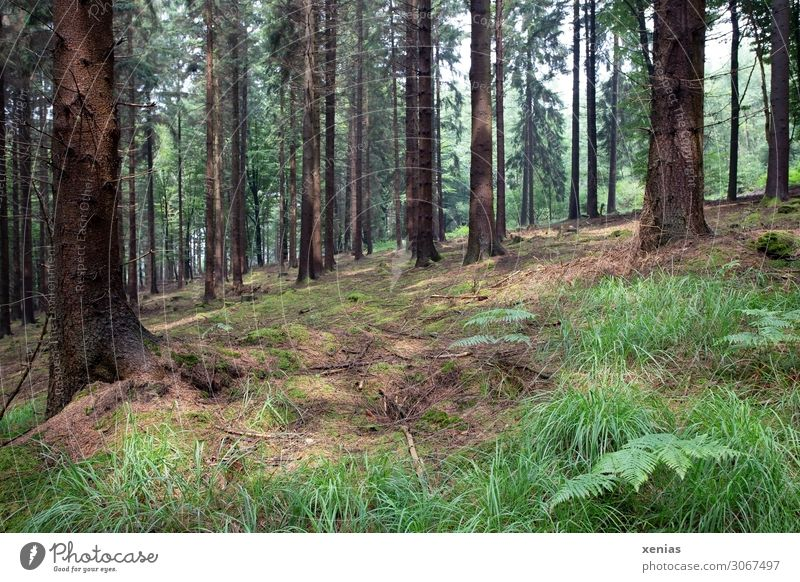 in the wood Environment Nature Landscape Animal Spring Summer Climate change Tree Grass Fern Forest Virgin forest Mountainous area Natural Brown Green Slope