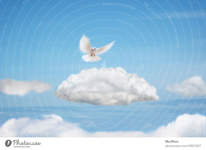 dove of peace Freedom Animal Clouds Bird Pigeon Flying White Peace Ease Collage Dove of peace Illustration Symbols and metaphors Cloud formation Heaven Wing