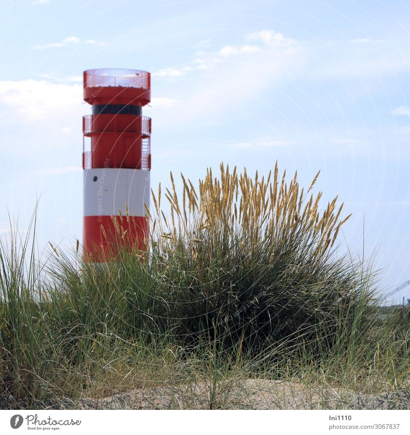 Lighthouse on the dune Landscape Summer Plant Grass Leaf Blossom Wild plant marram grass Coast Beach North Sea Island Blue Yellow Green Red White