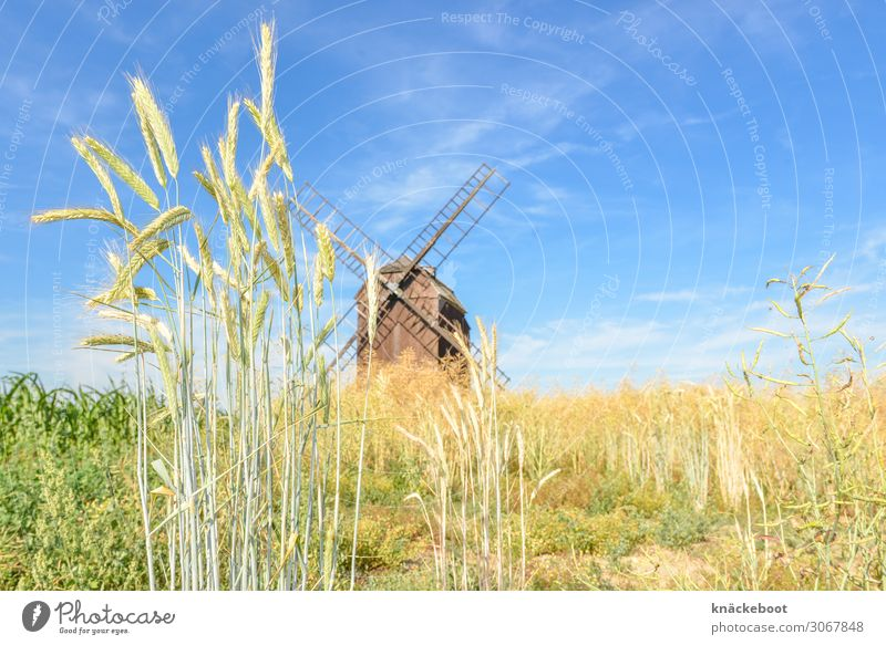 Nature Summer Landscape Food Environment Agriculture Grain Forestry Agricultural crop
