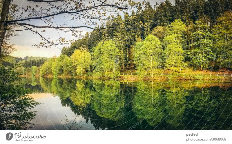 Dam idyll IV Nature Water Spring Tree Forest Reservoir Wet Brown Yellow Green Orange Loneliness Relaxation Leisure and hobbies Idyll River dam Colour photo