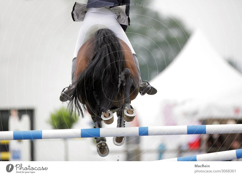 show jumper Sporting event Human being Horse Jump Large Above on at brd Federal Republic of Düsseldorf German Germans Germany European Good Behind Hind quarters