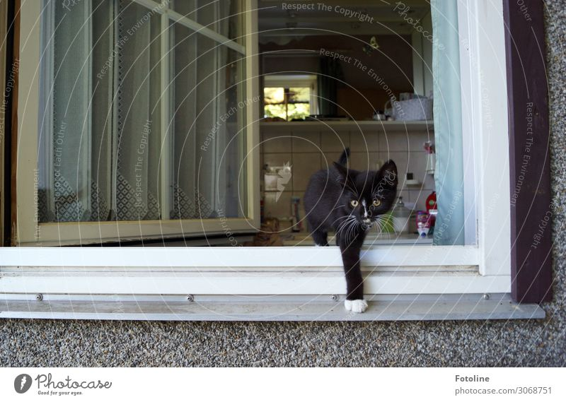 What's going on out there? House (Residential Structure) Detached house Building Window Animal Pet Cat Pelt 1 Baby animal Brash Free Curiosity Cute Black White