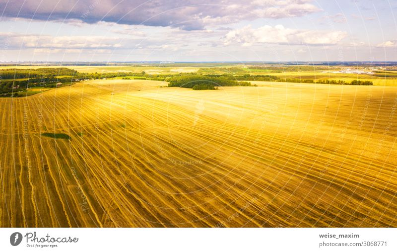 Harvester machine working in field. Agriculture. Nature Summer Plant Landscape Autumn Yellow Meadow Work and employment Above Field Gold Vantage point Growth