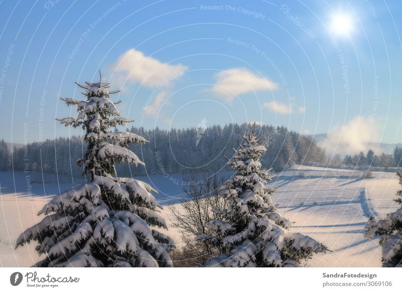 Sky Vacation & Travel Nature Christmas & Advent White Calm Forest Winter Life Cold Snow Germany Contentment Hiking Europe Frost