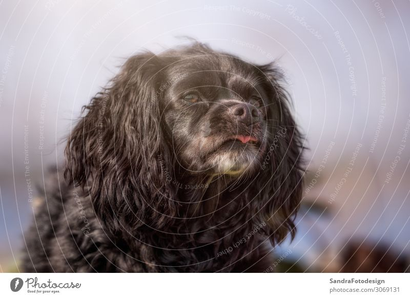 Nature Dog Animal Joy Background picture Garden Park Joie de vivre (Vitality) Observe Posture Watchfulness To feed Grinning Cuddly Feeding Love of animals
