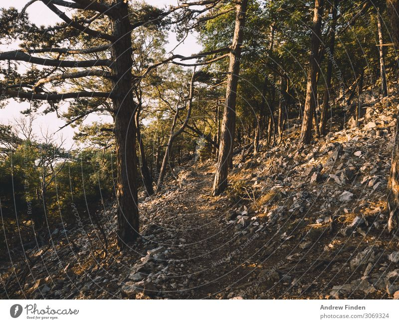 Forest Path Adventure Expedition Mountain Hiking Climbing Mountaineering Tree Stone Experience Vacation & Travel Colour photo Subdued colour Exterior shot