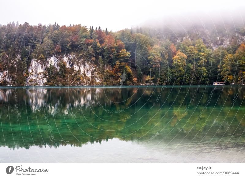 Nebulous on Alpsee. Vacation & Travel Trip Nature Landscape Autumn Fog Forest Rock Lake alpine lake Green Turquoise Sadness Concern Grief Idyll Tourism