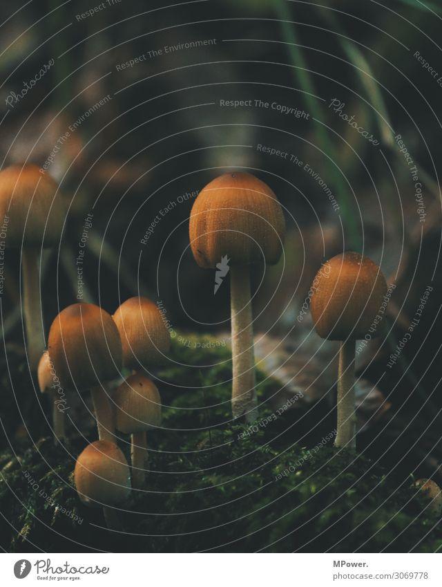 Nature Plant Forest Dark Environment Esthetic Mushroom Moss Woodground