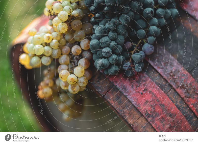 Blue and white grapes on the aged wine barrel in the vineyard Food Fruit Dessert Beverage Alcoholic drinks Wine Healthy Eating Agriculture Forestry Nature Plant