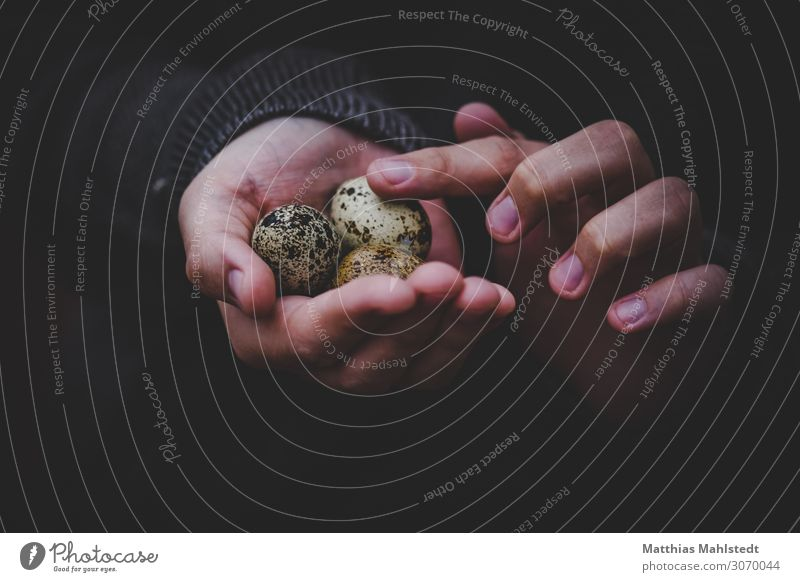quail eggs in the hand Young woman Youth (Young adults) Hand Fingers 1 Human being 18 - 30 years Adults Environment Quail's egg Touch Discover To hold on