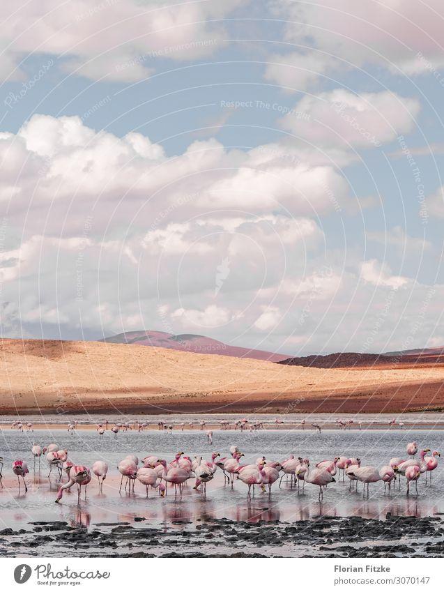 Beautiful Water Landscape Clouds Animal Sand Wild animal Simple Hill Drought Marsh Herd Bog Flamingo