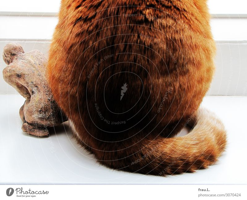 bottom to bottom Art Sculpture Animal Pet Cat 1 Sit Brash Beautiful Uniqueness Natural Original Brown Red Safety (feeling of) Agreed Sympathy Love of animals