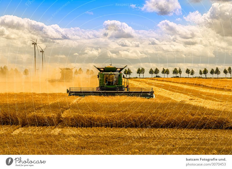 Large combine harvester mowing a cereal field Grain Summer Work and employment Agriculture Forestry Machinery Nature Landscape Sky Clouds Sun Autumn