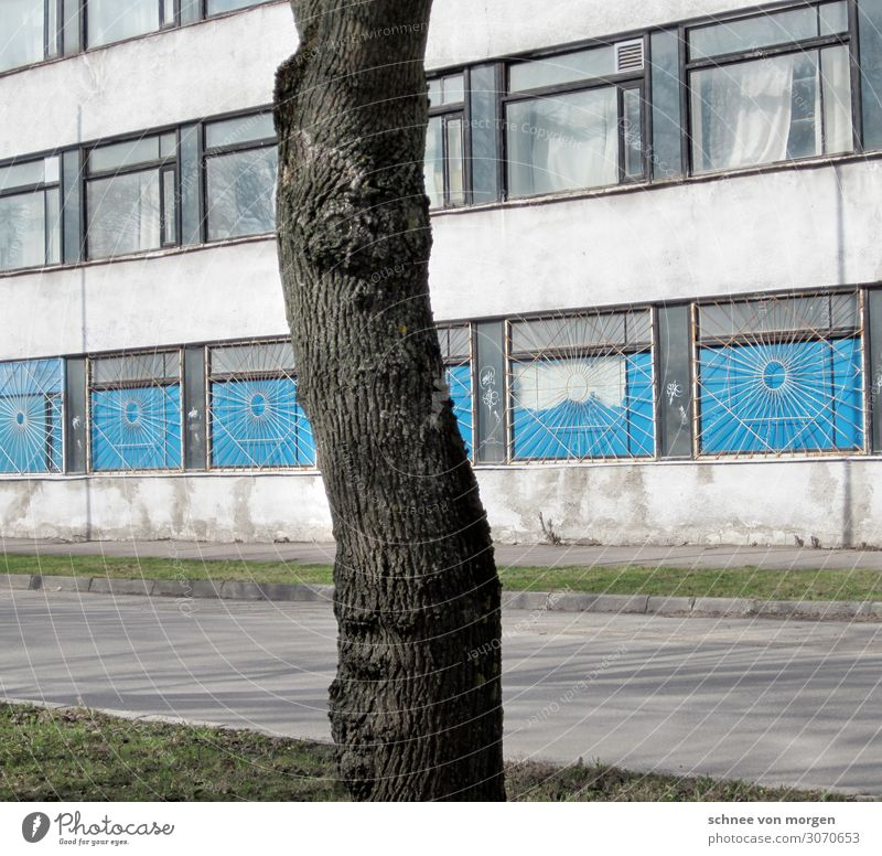 "tree Outskirts House (Residential Structure) Facade Traffic infrastructure Bizarre ""East Lithuania Building Tree"" Colour photo Pattern Evening"