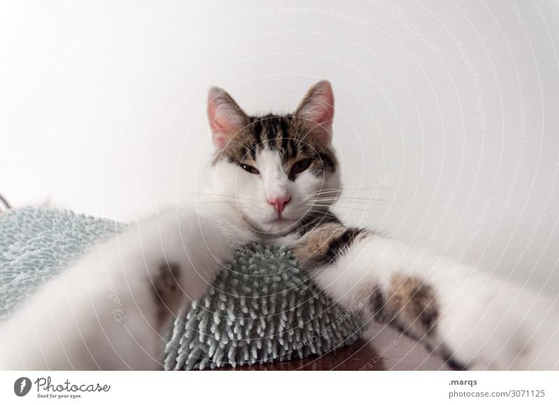 selfie Animal Pet Cat 1 Exceptional Funny Fatigue Whimsical Selfie Colour photo Interior shot Copy Space left Copy Space right Copy Space top Isolated Image
