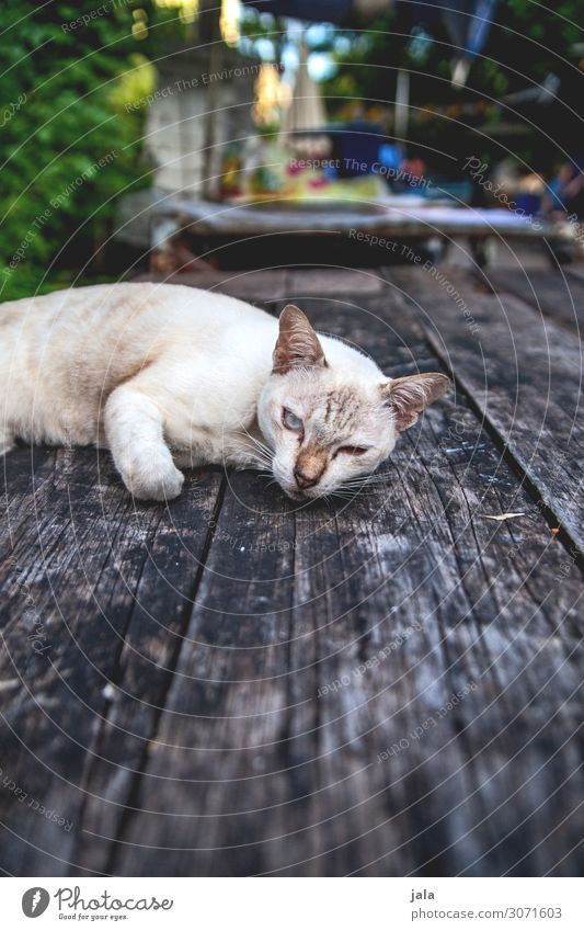 cat Table Animal Pet Cat 1 Observe Relaxation To enjoy Beautiful Cuddly Near Natural Cute Town Wooden table Colour photo Exterior shot Deserted Day