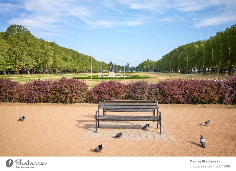 An empty bench in Jasne Blonia park in Szczecin. Nature Sky Park Small Town Pigeon Romance Serene Patient Calm Loneliness Bench Poland sunny Europe City Stettin