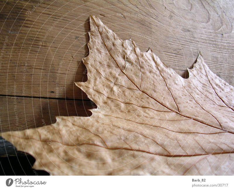 Leaf Autumn Wood Wood flour