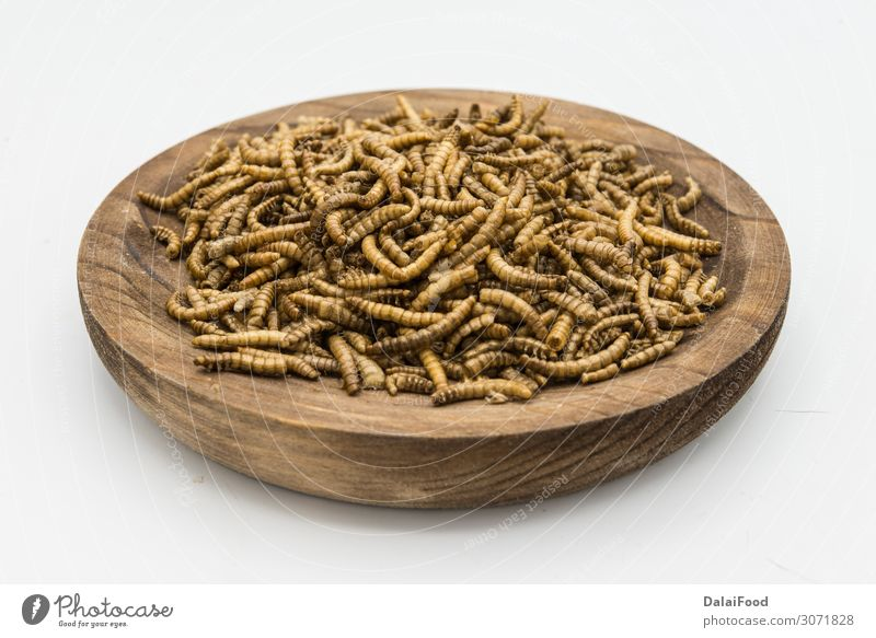 mealworms crustaceans tenebrio molitor isolated Nature White Animal Black Yellow Natural Brown Body Fresh Vantage point Insect Bowl Creepy Meal Packaging Freeze